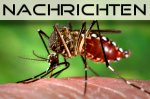 Aedes Aegypti - �bertr�ger des Dengue Fiebers (foto: James Gathany)